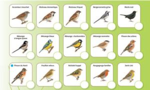 """Formulaire """"Oiseaux des jardins"""""""