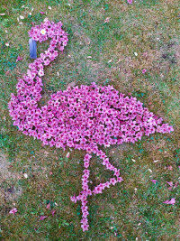 FABRICE / ADULTE / FLAMANT ROSE